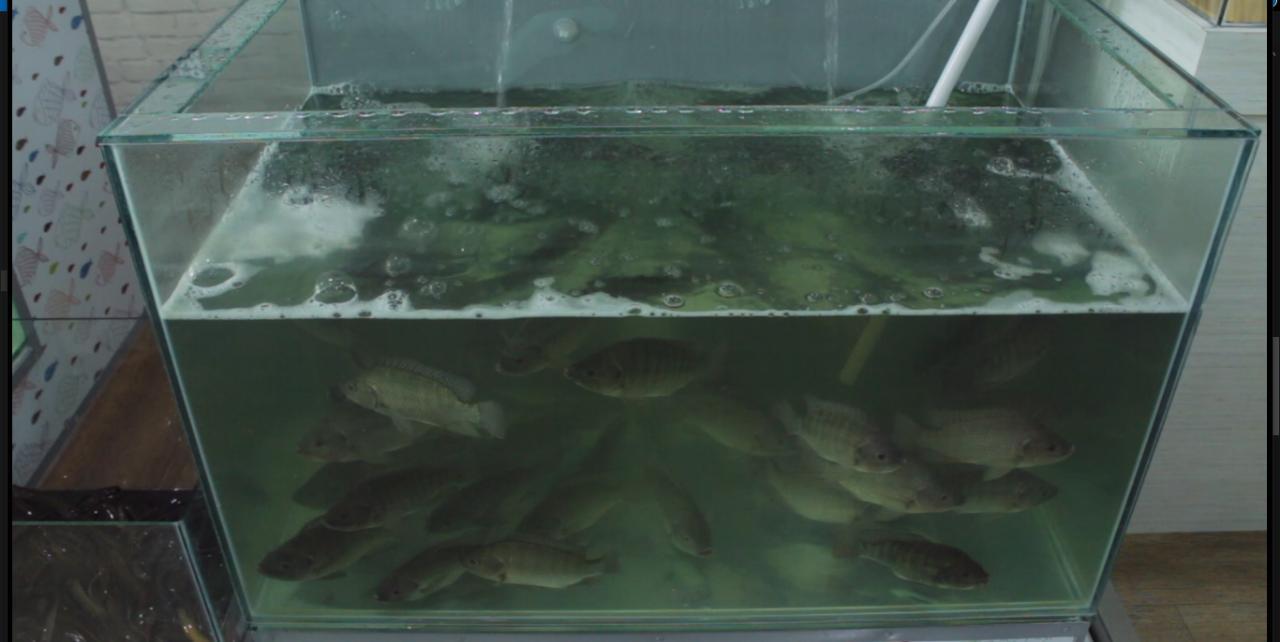 Depo Ikan Segar Kini Ada Di Banjarbaru 8